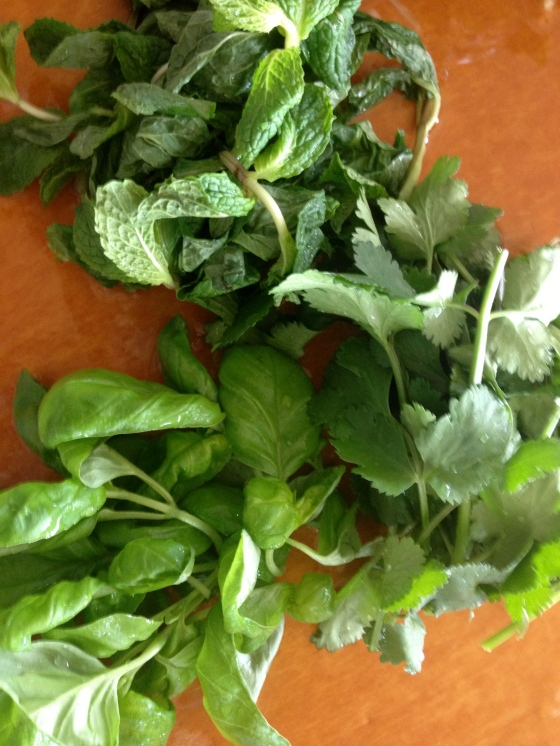 Mint, Cilantro and Basil